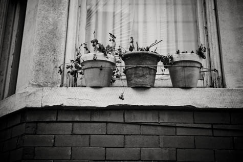 Black & White Flower Pots