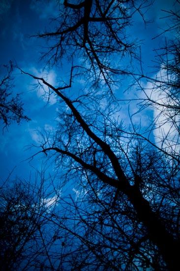 Blue Skys & Dead Trees?