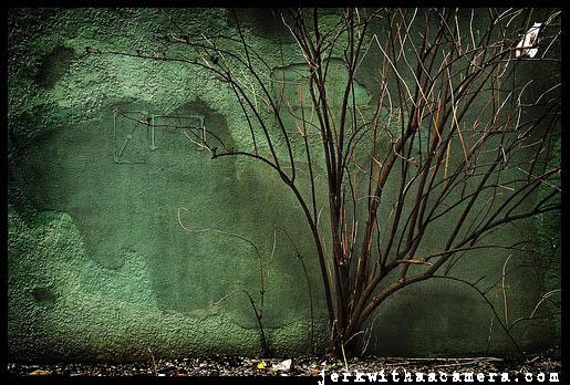 tree-on-green-wall.jpg