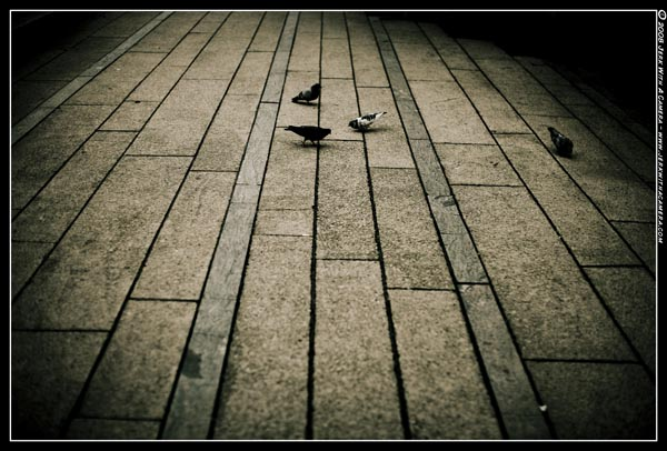 Pigeons & Robson Square