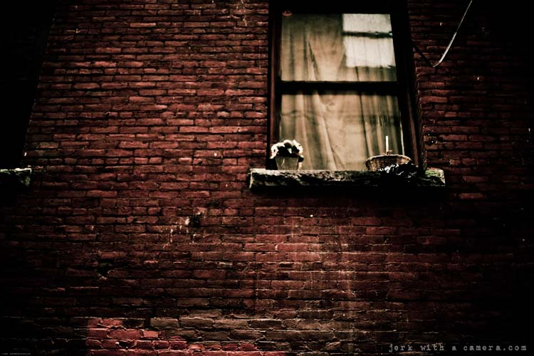 Brick Walls & Window Plants
