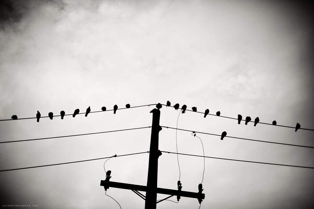 Birds On a Wire!